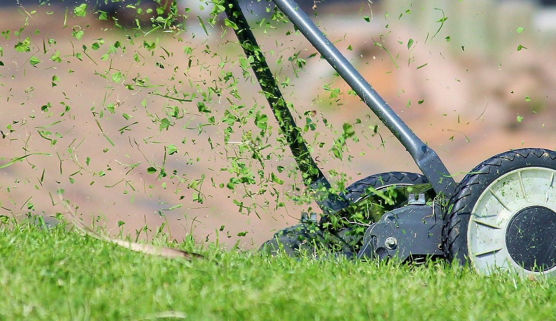 Tout savoir pour prendre soin de sa pelouse